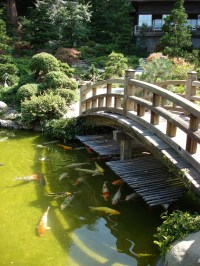 The gallery for --> Large Backyard Ponds