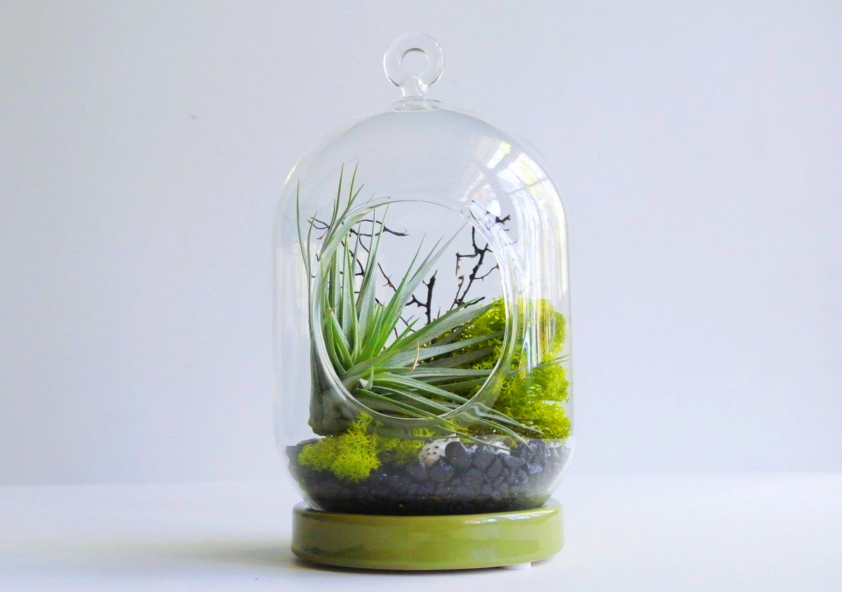 Product Of The Week: A Beautiful Terrarium