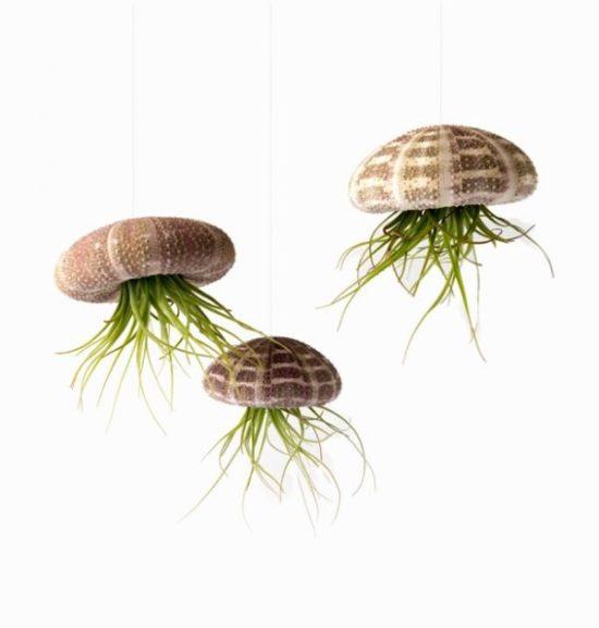 Tillandsia oaxacana planter ideas