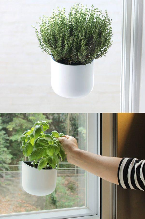 Hanging Window Herb Planters