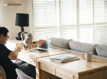 How To Make A Cat Happy: Cat Friendly Home Design images 15