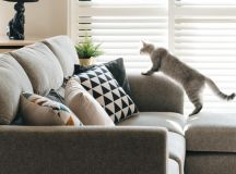 How To Make A Cat Happy: Cat Friendly Home Design images 10