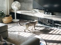How To Make A Cat Happy: Cat Friendly Home Design images 6
