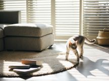 How To Make A Cat Happy: Cat Friendly Home Design images 9