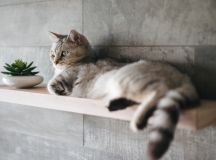 How To Make A Cat Happy: Cat Friendly Home Design images 5