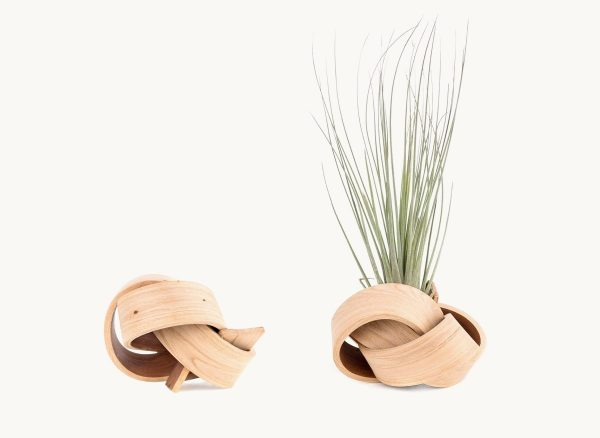 beautiful-air-plant-holders-600x438 Product Of The Week: Beautiful Bent Wood Sculpture Planters