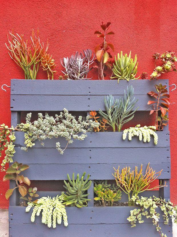 50 Best Succulent Garden Ideas For 2017