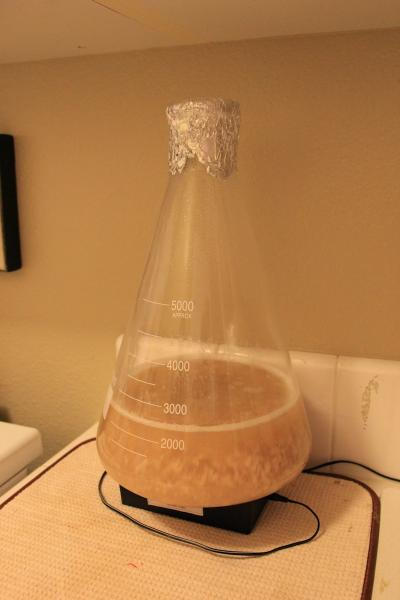 Yeast Harvesting: A Novel Approach? - Brulosopher - 1-232.jpg