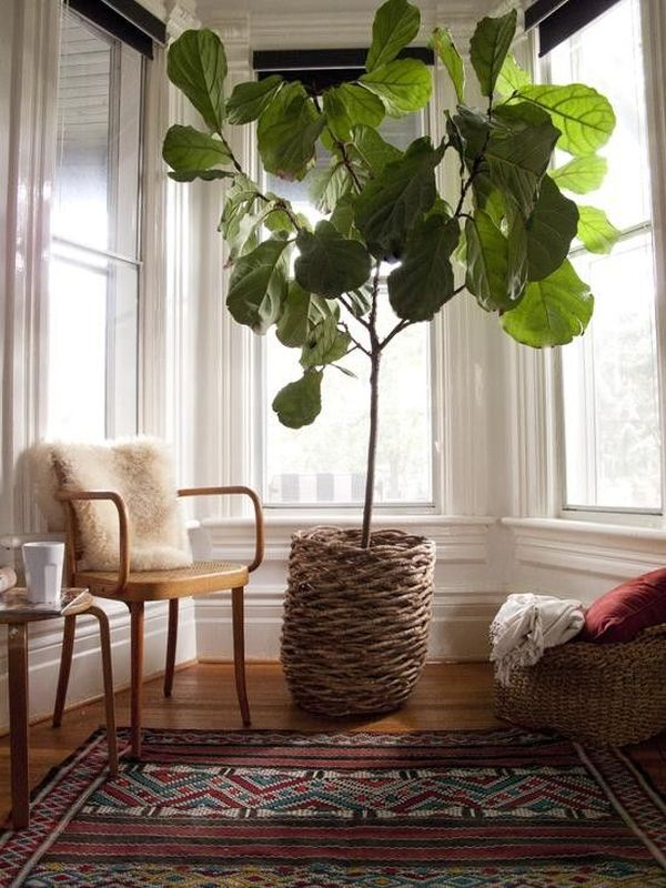 7 Stylish Ways To Use Indoor Plants In Your Home's Décor