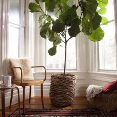 Living Room Decor With Plants Ceramic Tile Flooring Pictures 7 Stylish Ways To Use Indoor In Your Home S View Gallery