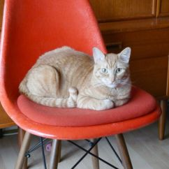 Eames Molded Side Chair Swivel Mid Century 30 Cute Cats That Love The Chairs