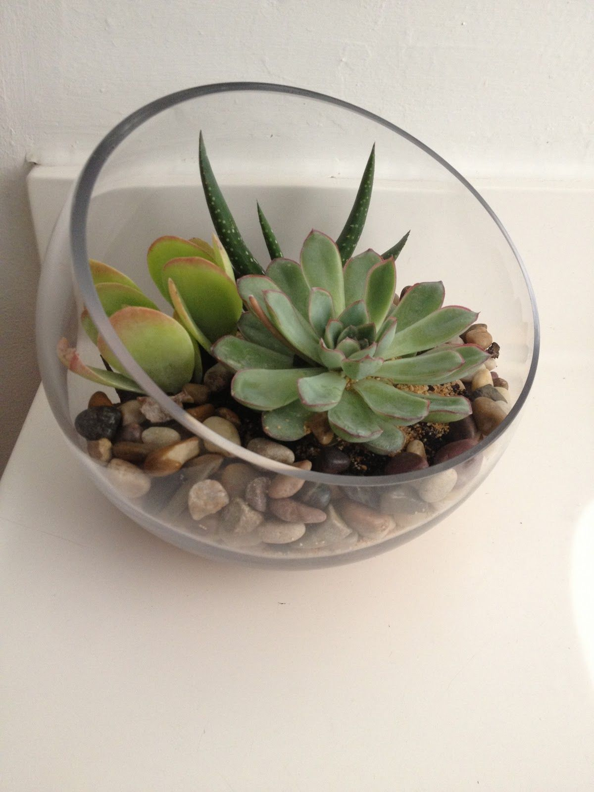 Sprinkling & Decorating With Succulents Around the House
