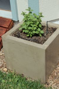 Diy Concrete Planters Large