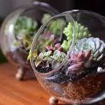 What It Means To Decorate With Terrariums Key Tips And Details