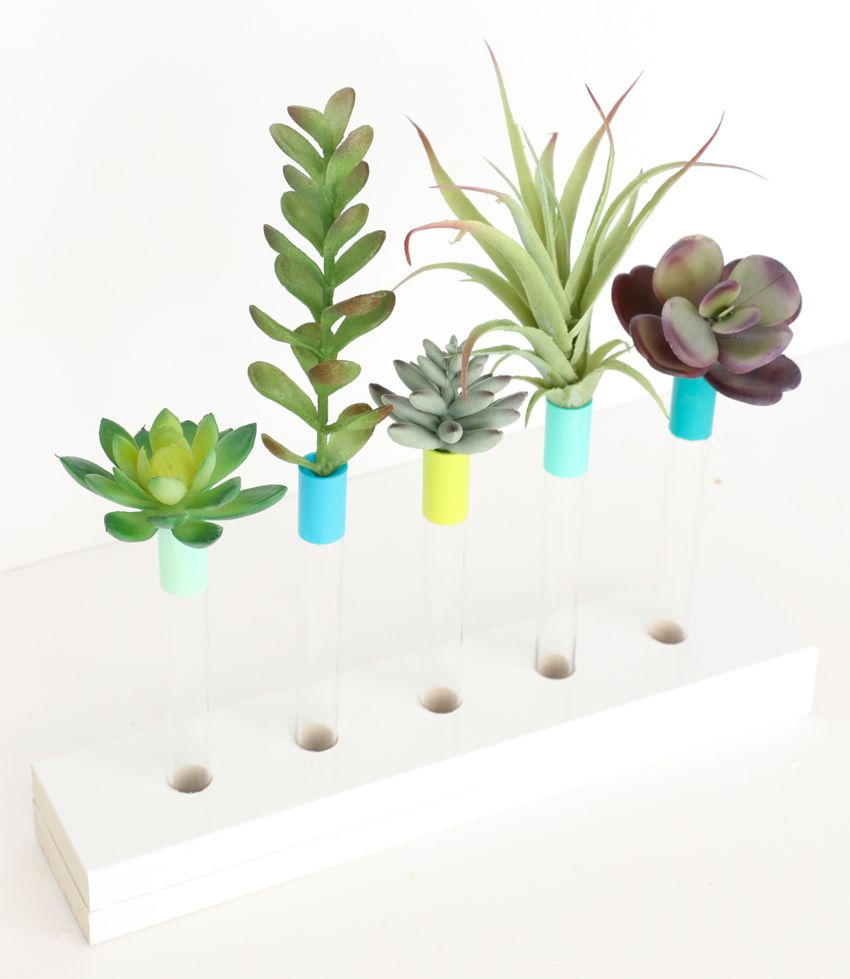 Colorful test tube vases for succulents