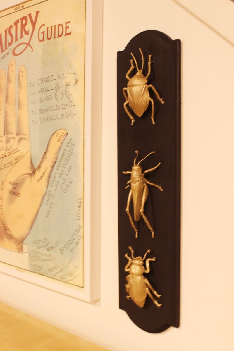 DIY Insect Taxidermy-hang your halloween art