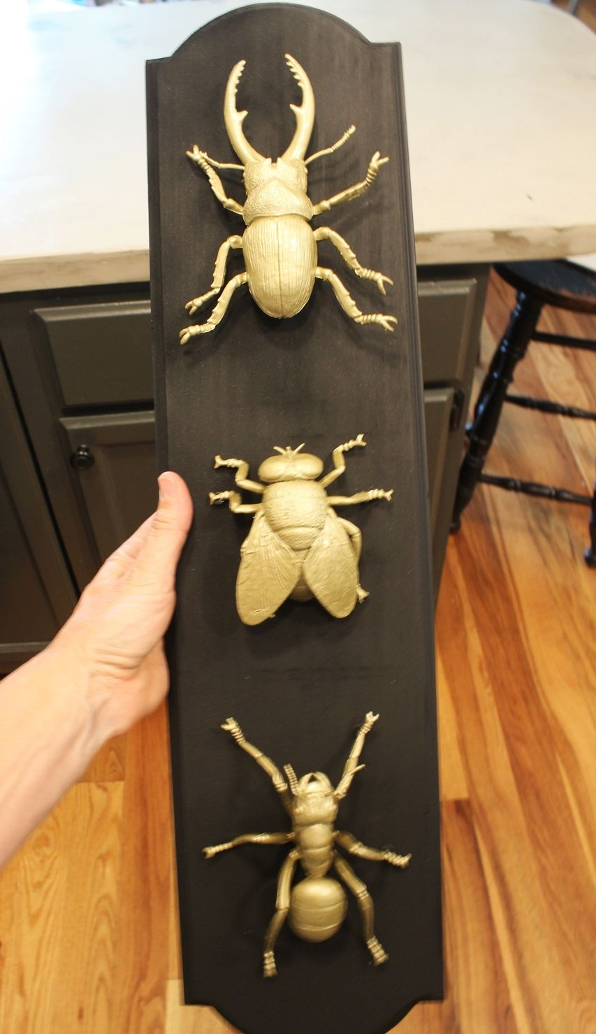 DIY Insect Taxidermy- prepare to display