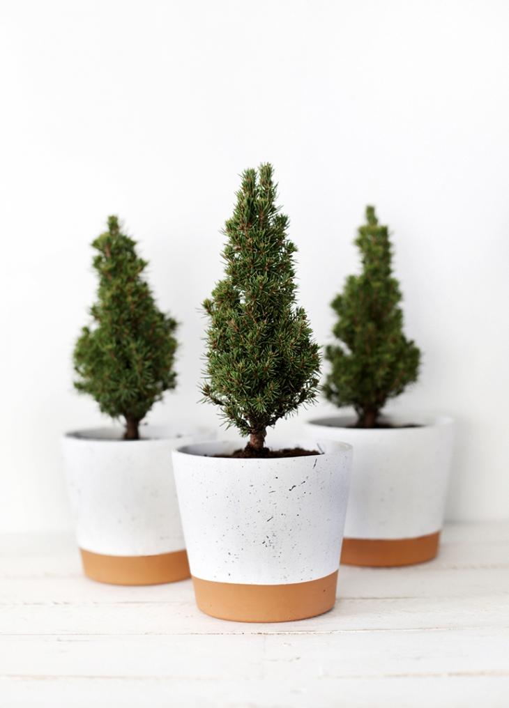 mini christmas trees packed