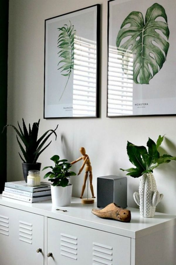 Decorating Office with Plants