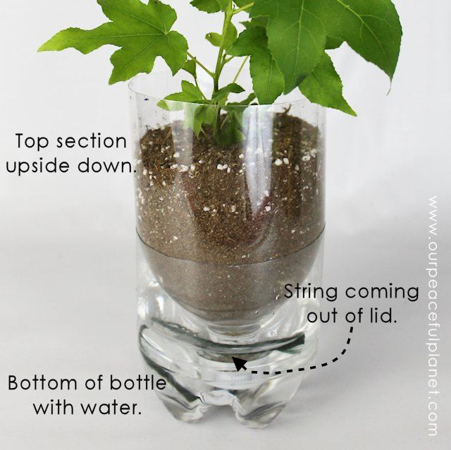 15 Diy Self Watering Planters That You Can Craft Today