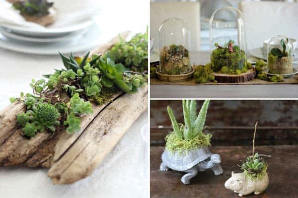 24 Of The Most Beautiful Ideas On Indoor Mini Garden To Collect