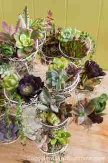 Fill Home With Glamorous Simple Diy Succulent