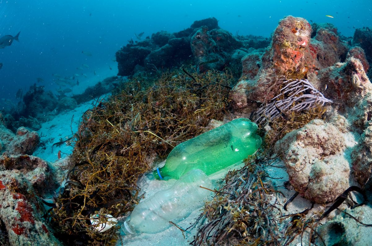 Plastic Pollution Is Killing Coral Reefs 4 Year Study