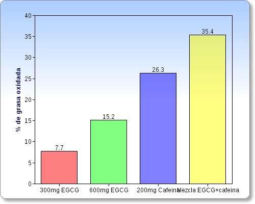 EGCG y cafeina para perder grasa