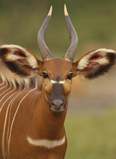 african animal pictures howstuffworks