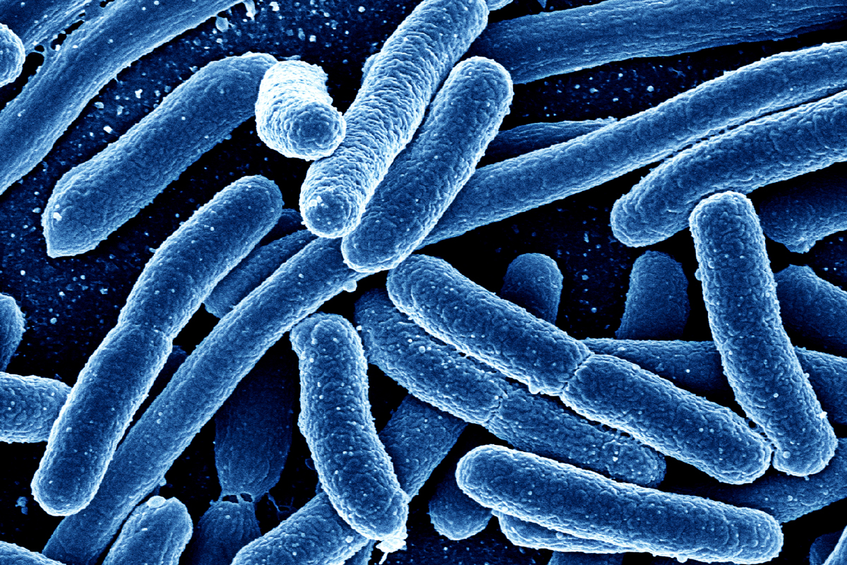 Can We Use Microbes To Fight Disease