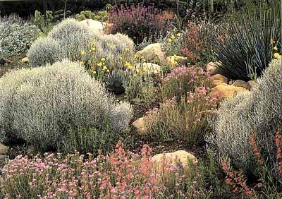 southern california garden ideas