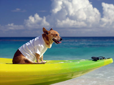 How To Vacation With Your Pet Howstuffworks