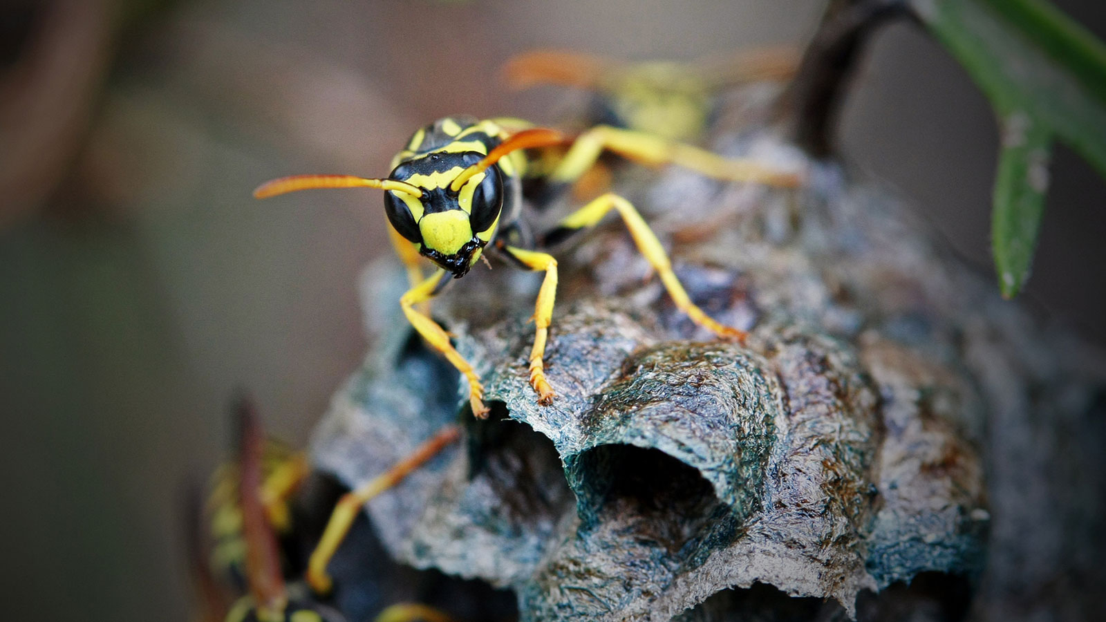 Wasps Have An Image Problem But Here S Why We Need Them Howstuffworks