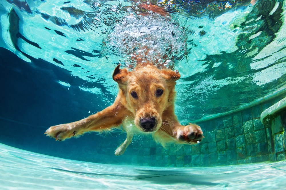 medium resolution of rescue dog rehab how hydrotherapy gets them back on their feet and helps with arthritis post op recovery