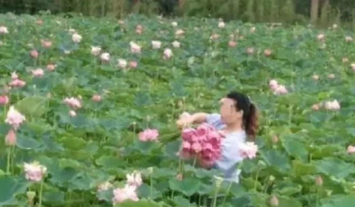 The flower-pickers have prompted widespread condemnation. Photo: Red Star News