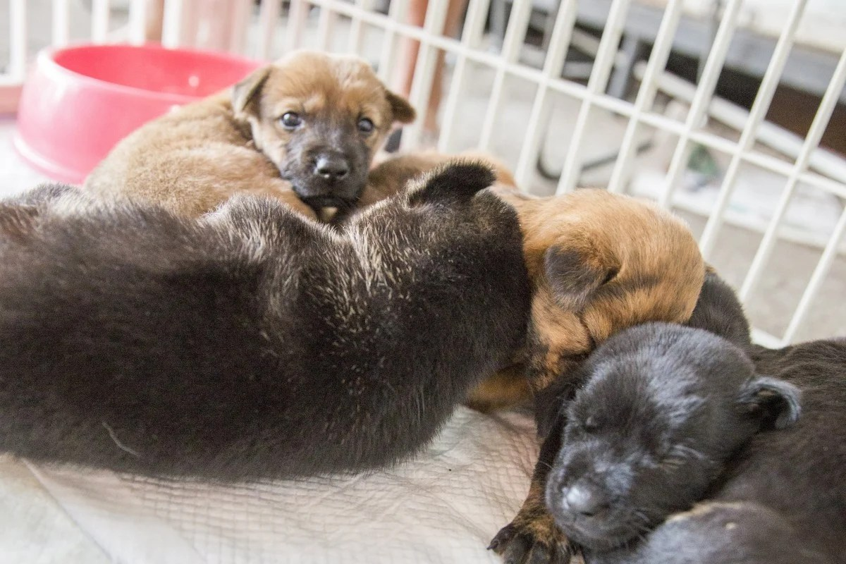 hight resolution of puppies at a dog adoption day organised by the non profit making veterinary services society