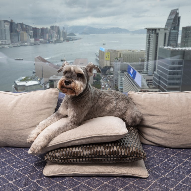 The Luxury Pet Friendly Hotels Taking Pet Pampering To New