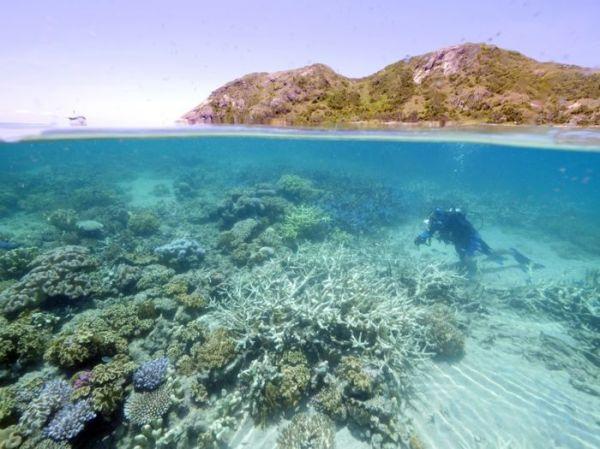 WWF AUSTRALIA (WWF AUSTRALIA/AFP)
