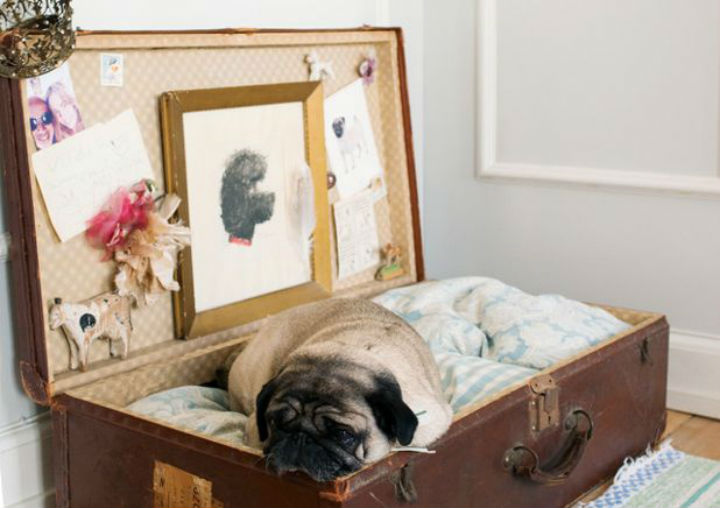 walker roller chair white leather desk images of pampered dogs prove we don't live our best lives   icepop