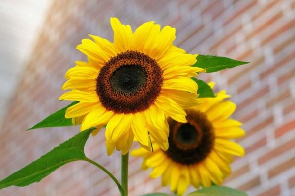 Arti Bunga Pernikahan dari Beberapa Jenis Bunga  VCO