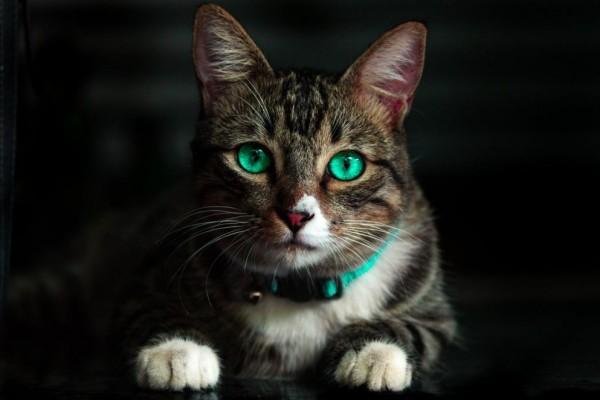Pecinta Kucing Wajib Tahu, 7 Fakta Virus Panleukopenia yang Mematikan