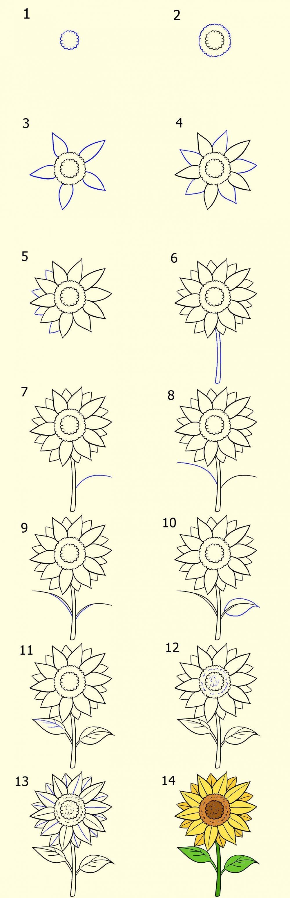 3 Cara Menggambar Sketsa Bunga yang Simple dan Mudah Ditiru
