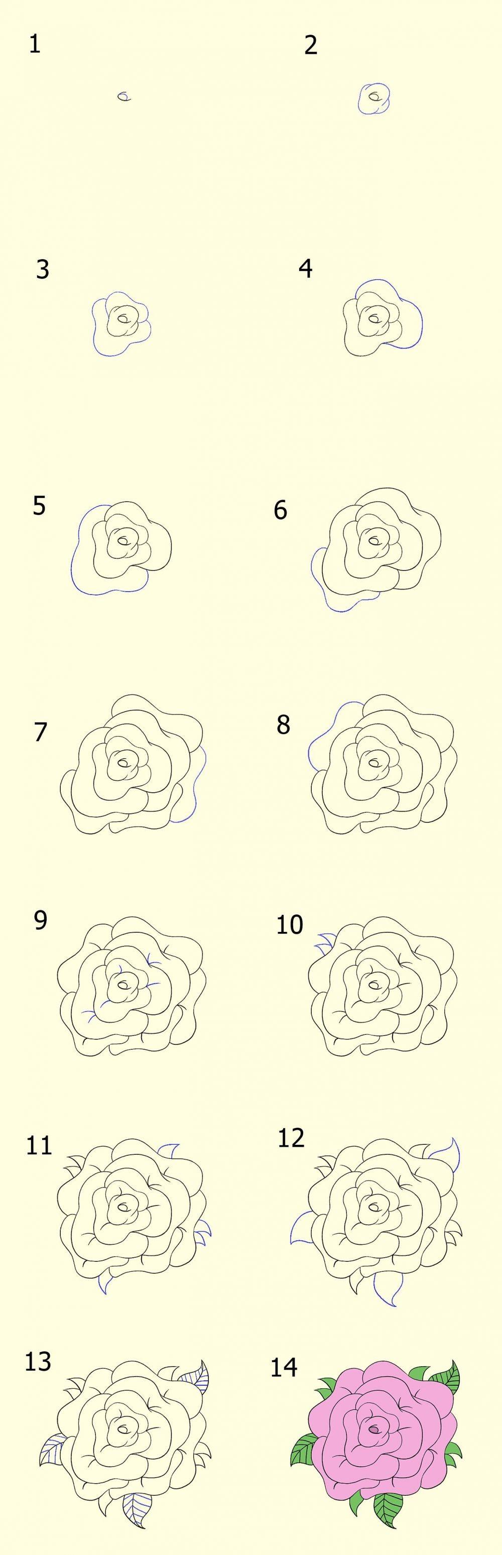 Menggambar Bunga Mawar : menggambar, bunga, mawar, Menggambar, Sketsa, Bunga, Simple, Mudah, Ditiru