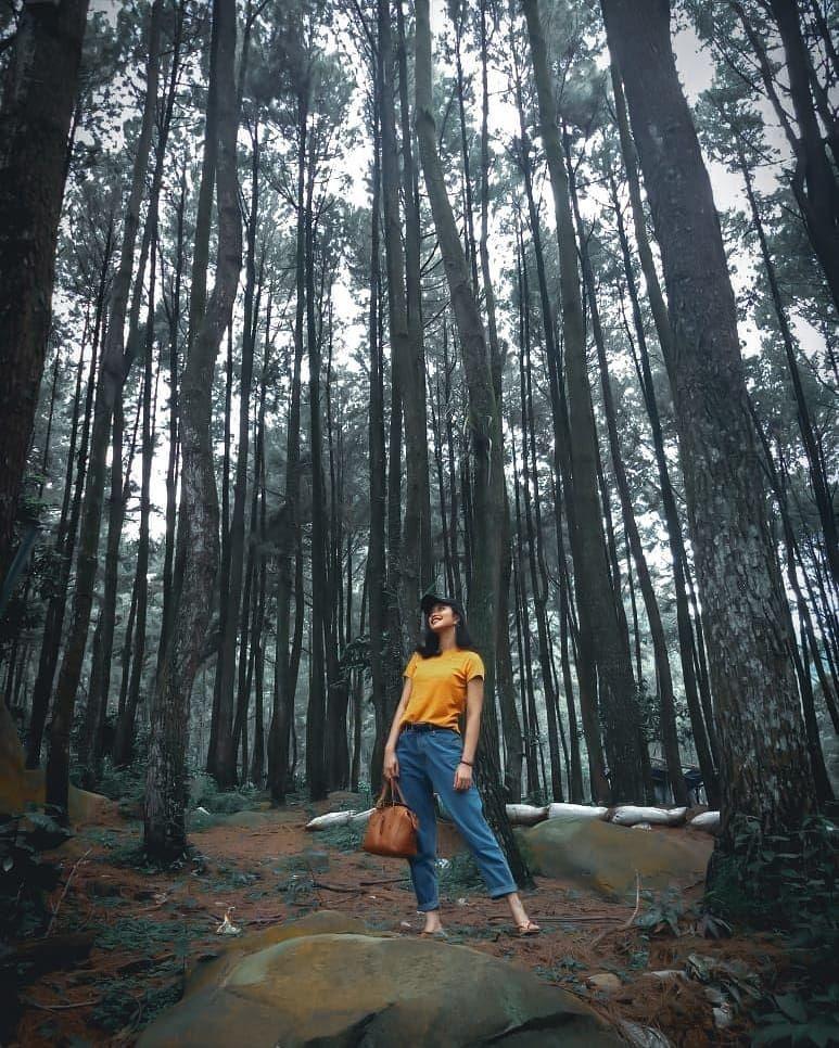 Hutan Pinus Eropa : hutan, pinus, eropa, Rute,, Harga,, Hutan, Pinus, Sentul, Untuk, Liburan, Serumu