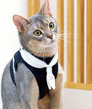 散歩や防災におすすめの貓用ハーネス10選 ベスト、紐タイプなど貓の性格に合う選び方や嫌がる時の付け方 ...