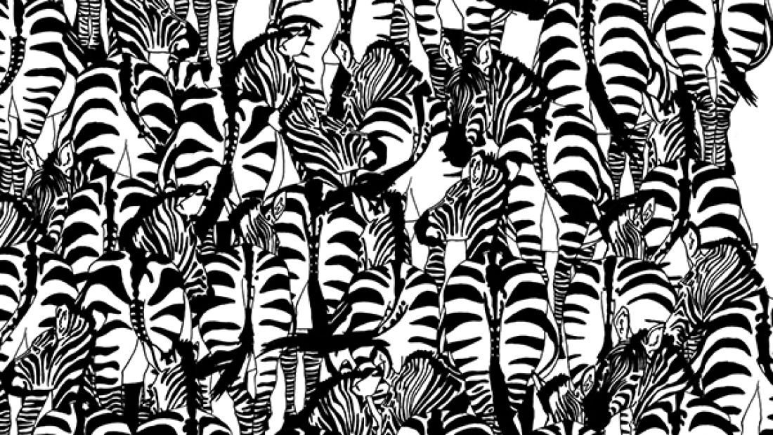 Can You Spot The Hidden Animal Among The Herd Of Zebra