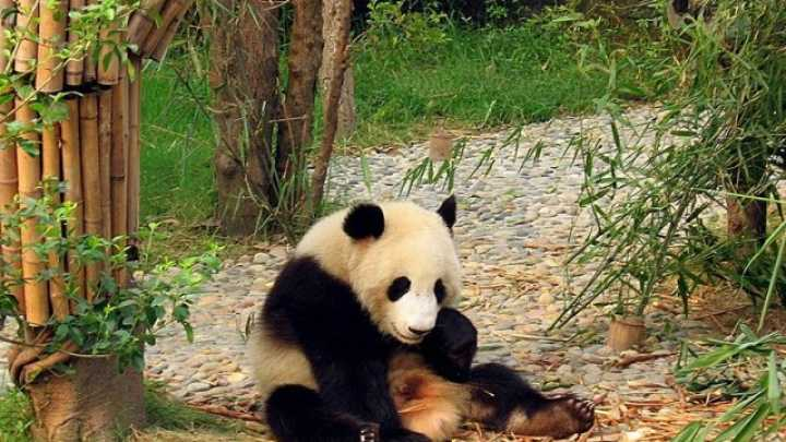 China Outlaws The Eating Of Endangered Animals  IFLScience