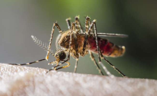 Florida Teen Has First Confirmed Case Of The Mosquito