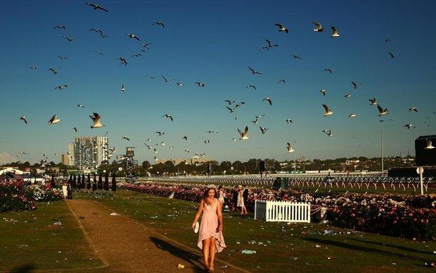 Melbourne-races
