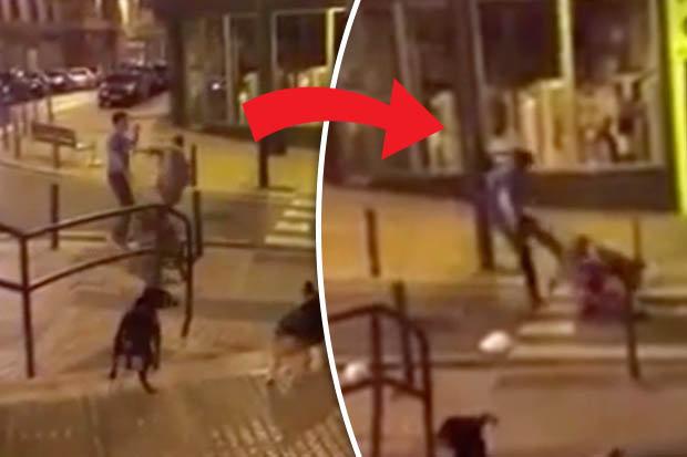 dog walker left unconscious